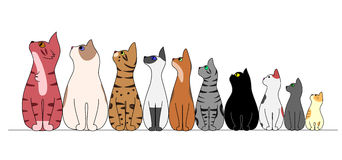 Cats  in a row,looking away Royalty Free Stock Photography