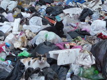 Cats in the Rubbish Stock Image