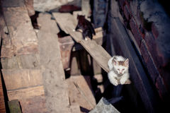 Cats in the ruins of homes Stock Images