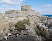 Cats and ruins near Rhodes lighthouse Royalty Free Stock Photo