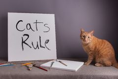 Cats rule with orange tabby cat. Canvas with cats rule painted on it orange tabby cat sitting by canvas stock photos