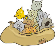 Cats in sack. Cartoon illustration of cats in sack Stock Images
