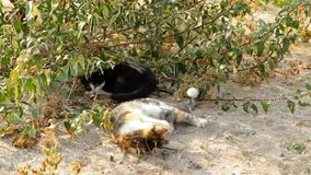 Cats on the sandy beach. Two cats spending time outdoors stock video footage