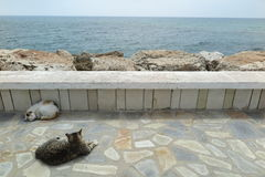 CATS AND SEA VIEW Royalty Free Stock Images