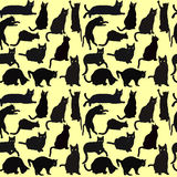 Cats seamless background Stock Image