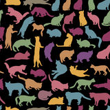 Cats seamless pattern. Kitten silhouette background Royalty Free Stock Photo