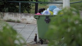 Cats searching for food in street dumpsters. NEA KALLIKRATIA, GREECE - AUGUST 12, 2017: Two cats trying to get some food in full dumpster in the street stock video footage