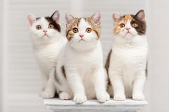Cats on the shelf Stock Image