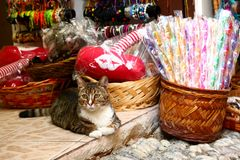Cats and shops. Old town of Rhodes, shops and cats royalty free stock image