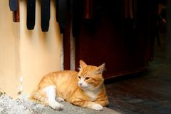 Cats and shops. Old town of Rhodes, shops and cats stock image