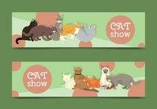 Cats show banner grooming or veterinary feline flyer vector illustration. Cute kitten pet poster. Funny animal studio. Lovely friendship advertisement pussy stock illustration