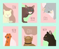 Cats show cards grooming or veterinary feline flyer vector illustration. Cute kitten pet poster. Funny animal studio. Lovely friendship advertisement cat stock illustration