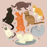 Cats show grooming or veterinary feline flyer vector illustration. Cute kitten pet poster. Funny animal studio. Lovely. Friendship advertisement cat champion stock illustration
