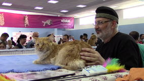 Pets show. Nice cats show in Bucharest stock footage