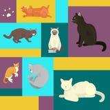 Cats show poster grooming or veterinary feline flyer vector illustration. Cute kitten pet background. Funny animal. Studio. Lovely friendship advertisement stock illustration
