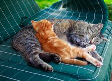 Cats siesta. Bacjground summer kitten Royalty Free Stock Photography