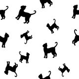Cats silhouette seamless pattern. Black cats  pattern over white background. Simple vector illustration Stock Image