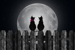 Cats silhouetted on full moon. Pair of cats silhouetted against full moon with tails entwined in a heart Stock Photos