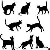 Cats silhouettes. Set of cats silhouettes - vector illustration Stock Photography