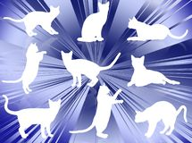 Cats silhouettes Stock Image