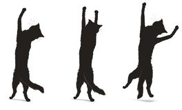 Cats silhouettes. Illustration of Three Black Cats. Vector file in eps Royalty Free Stock Images