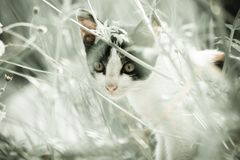 Cat and Nature royalty free stock images