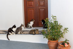 Cats sit by the door Royalty Free Stock Photo