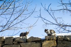 Cats sit opposite each other. Two cats sitting on a stone wall opposite each other.Clear sunny day. These animals like to walk and climb walls and trees royalty free stock photos