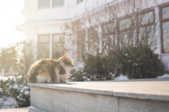 Cats sit in the warm sunshine. In winter stock photo