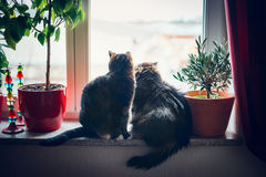 Cats sits on window sill and looking outside Stock Photos