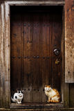 Cats sitting by a Barn door Stock Photos