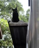 Cats sitting on the roof Stock Photography