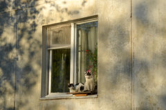 Cats sitting on the window royalty free stock image
