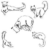Cats. A sketch by hand. Pencil drawing Royalty Free Stock Image