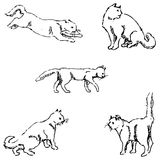 Cats. A sketch by hand. Pencil drawing Stock Photos