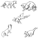 Cats. A sketch by hand. Pencil drawing Stock Image