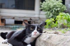 Cats sleep on the concrete floor. Stock Image