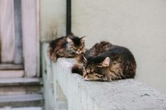 Cats sleep on the concrete parapet. Istanbul, Turkey royalty free stock photos