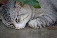 Cats sleep Royalty Free Stock Photography