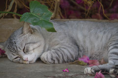 Cats sleep Stock Images