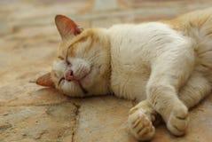 Cats sleep. Stock Photo