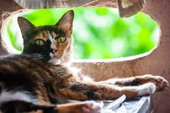 Cats sleep, then turned to look askance. Cat nap turned to look with skepticism stock photos