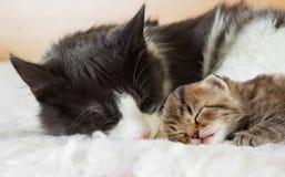 Cats sleep Stock Photos