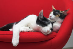 cats sleeping Στοκ εικόνα με δικαίωμα ελεύθερης χρήσης