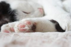 cats sleeping on bed Stock Photos