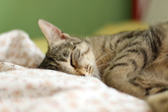 Cats Sleeping royalty free stock image