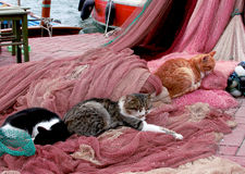 Cats sleeping on the fishing nets. Cats love the smell of fish Royalty Free Stock Photography
