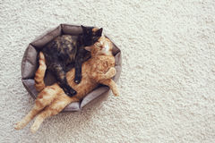 Cats sleeping and hugging Royalty Free Stock Photography