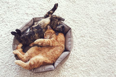 Cats sleeping and hugging Royalty Free Stock Image
