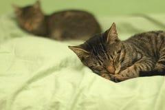 Cats Sleeping Royalty Free Stock Photography